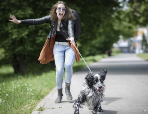🥇 Guardería para perros en Polanco – Cuidadores expertos en la CDMX