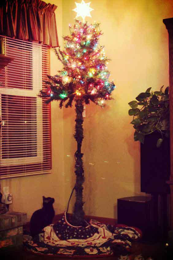 pino contra gato