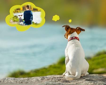 perro recordando a su dueño
