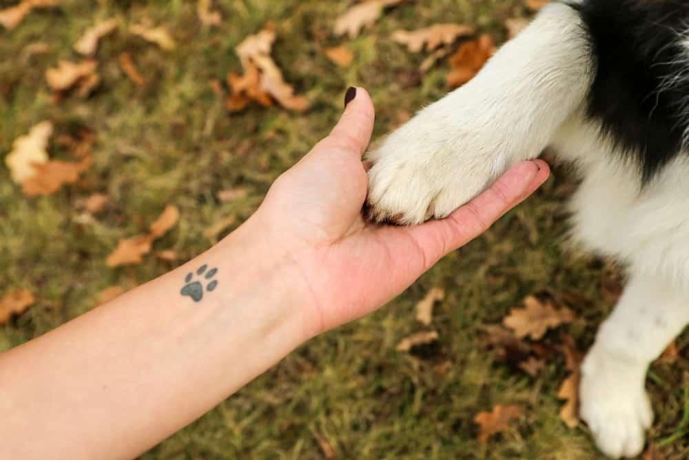 mano humana y de perro