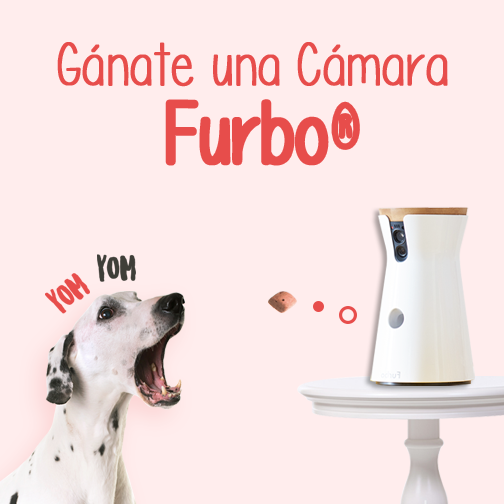 cámara Furbo