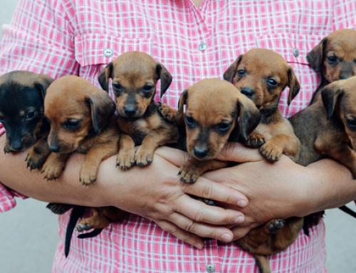 Datos que no sabías sobre los cachorros