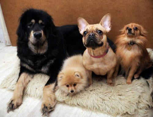 Precios de paseadores de perros en Lomas de Chapultepec y Toluca