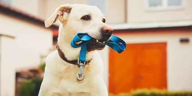 perro con correa en la boca