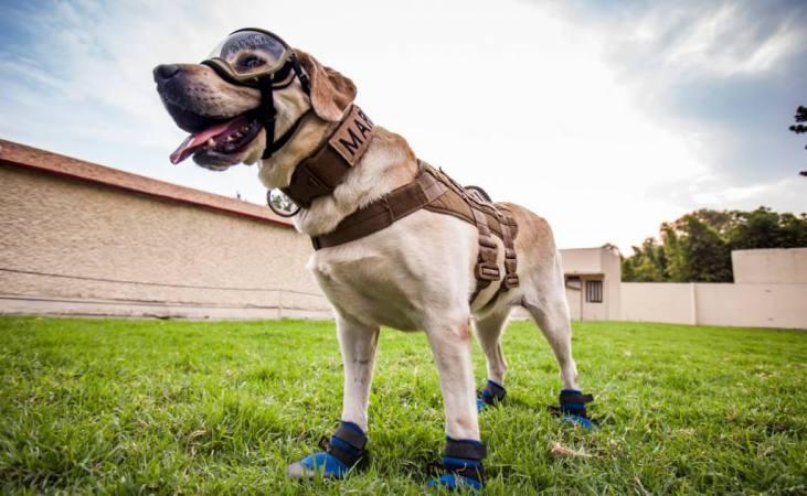 Frida perro rescatista