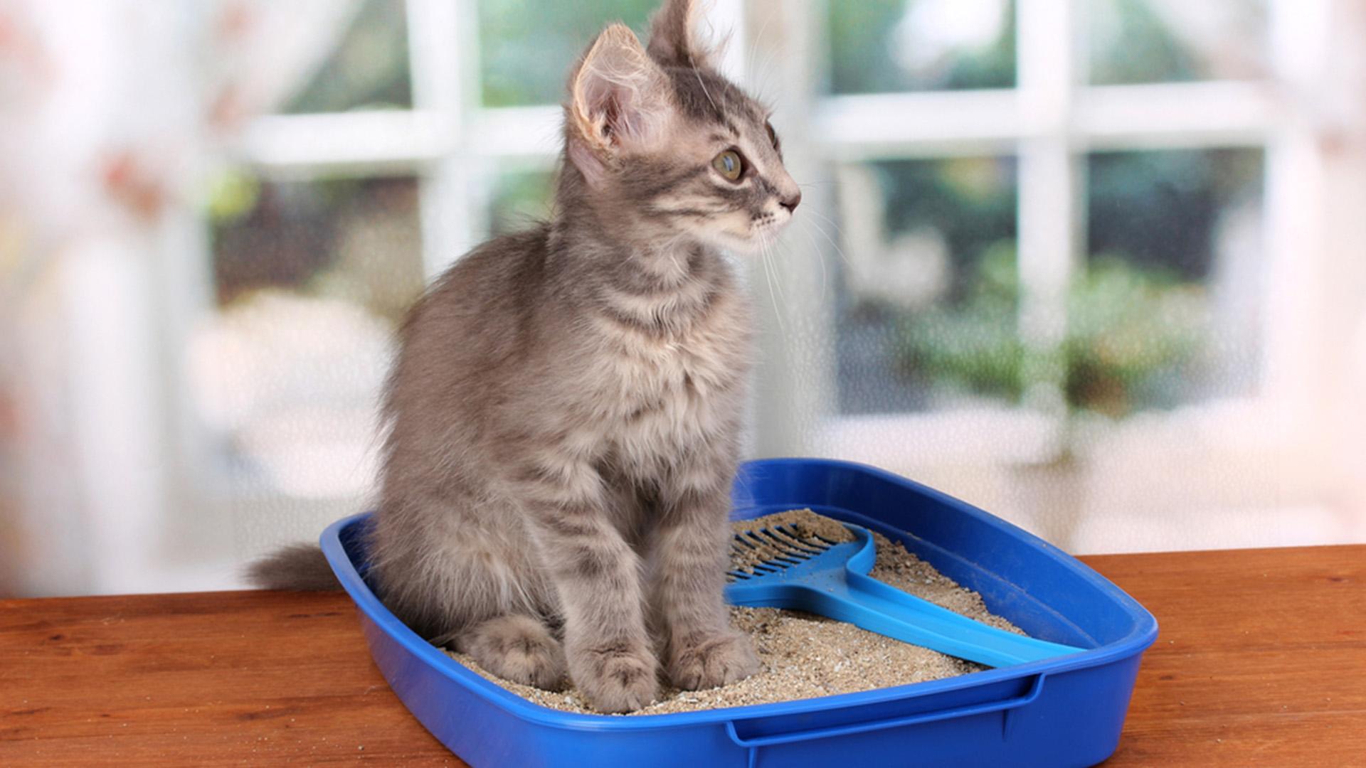 cat_sandbox