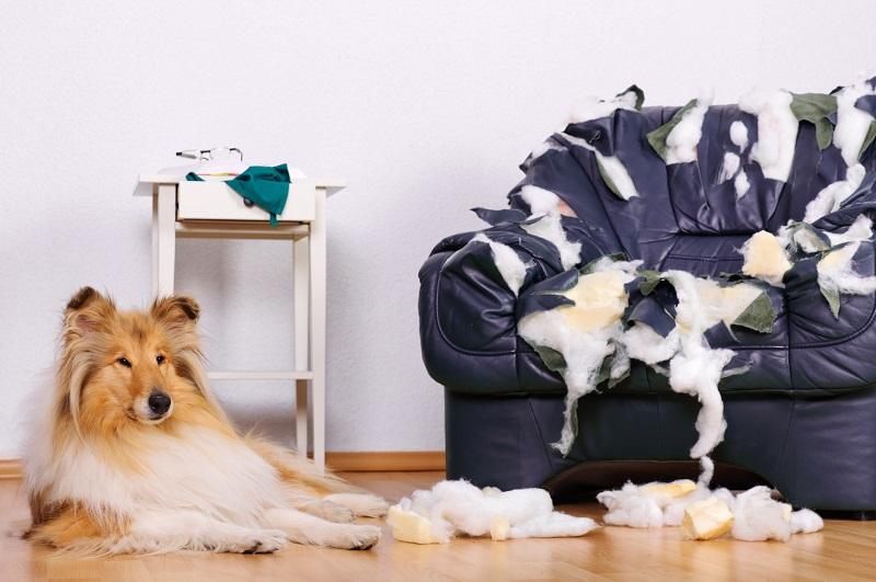 sillón destruido por perro