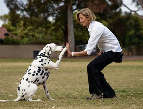 Cómo entrenar a tu perro