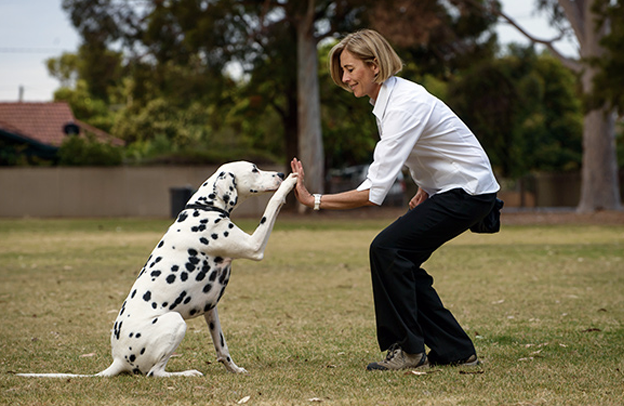 guarderina canina precio por día 2019