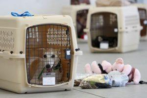 perro en transportadora para viajar en avión