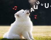 perro aullando