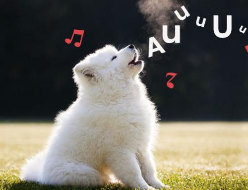 ¿Por qué los perros aúllan cuando escuchan una flauta o un sonido agudo?