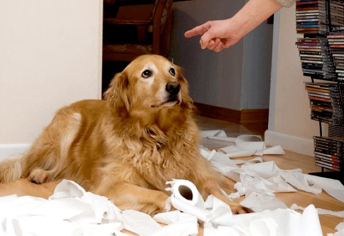 como educar a un perro a hacer sus necesidades