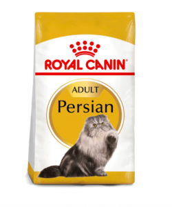 gato persa royal canin