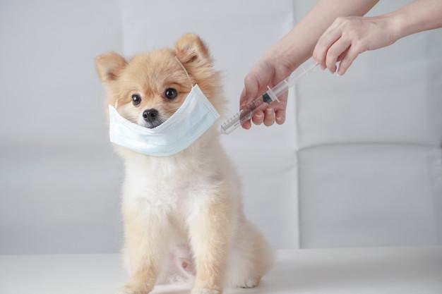 vacuna en cachorros