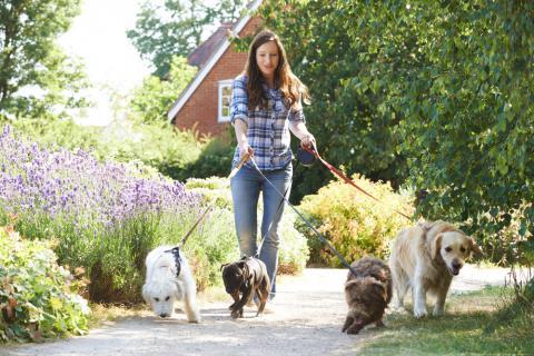 cuidador de perros